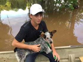 美国德克萨斯州爆发洪水 当地人自发救助困在房屋中的宠物