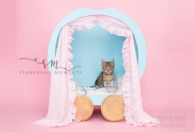 """女孩请求职业摄影师妈妈 为流浪小猫咪拍了一组""""新生儿""""照片"""