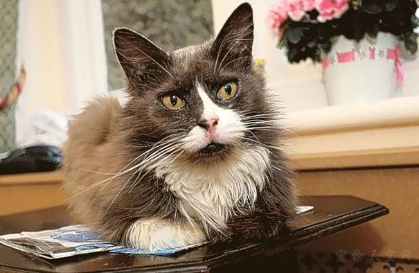 英国老奶奶与猫咪的感人故事