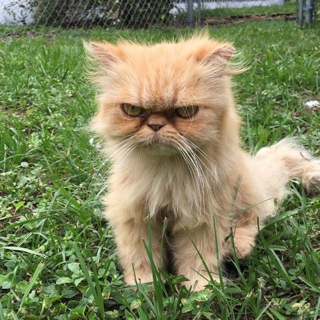 """伦敦街头的""""愤怒猫"""",不爽的面部表情,让它获救并走红网络"""