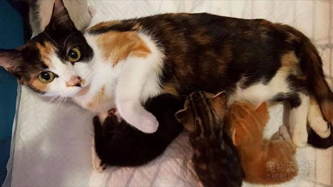 猫咪妈妈被一个男人打残疾后 用前爪爬着回去找自己的宝宝