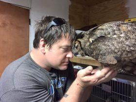 大角鸮意识到自己被人救后 给恩人一个暖心的拥抱
