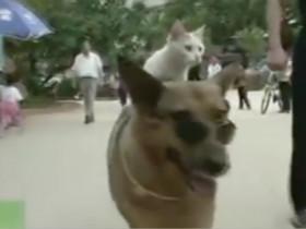 狗狗驮着猫咪散步兜风