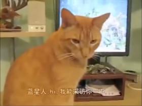 假如宠物能接受人类的采访