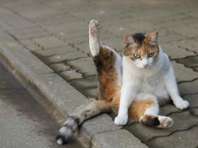 洗澡要洗干净,小猫认真舔尾巴的样子萌翻众人
