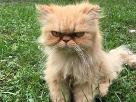 男子在废弃的房屋发现一只流浪猫 它的表情总是一脸不开心