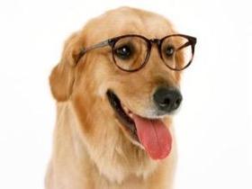 大部分主人都会忽视的一个问题 狗狗在炎热的夏天里会中暑死亡