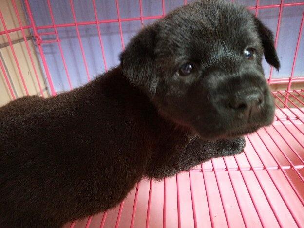 刚出生的小狗,多少天开始驱虫和打疫苗?