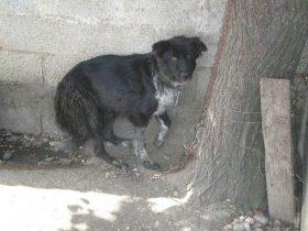 男子嫌母狗生太多小狗就想处死它们 最后被罚到几乎倾家荡产
