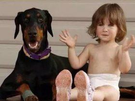 女子救了一只被弃养的杜宾犬 没想到它会救自己的小女儿一命