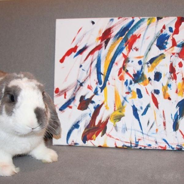 想养小宠了,养一只兔子是一种什么样的体验?