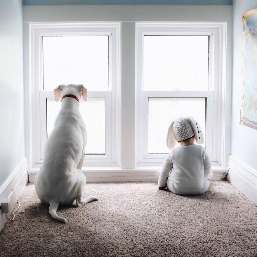 收养一只流浪动物(宠物)是什么体验?