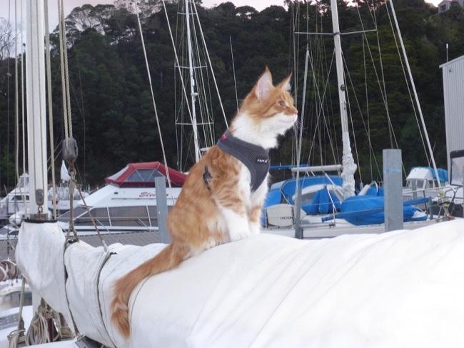 养猫要做好什么准备?包括哪些心理准备