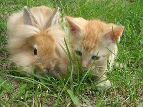 7个养兔的错误观点 喜欢宠物兔子的快来看