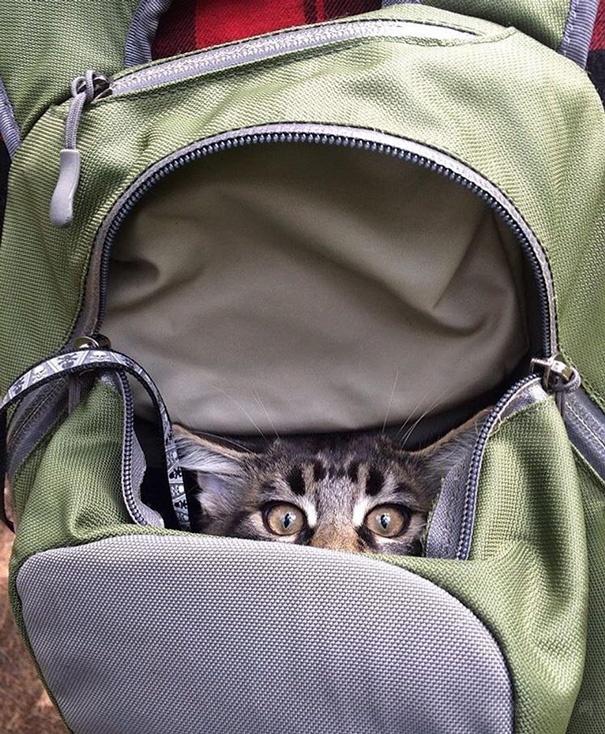 """""""带着猫咪外出野营""""活动�K在网上兴起  网友��������}纷纷晒出自己的照片"""