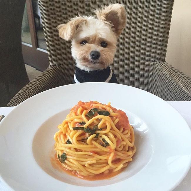 10种狗狗能吃的蔬菜,爱不爱吃就看缘分了