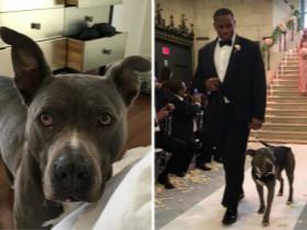 夫妻在婚礼现场 坚持用狗狗做伴郎
