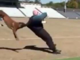 让人感到震惊的警犬训练视频