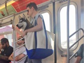 纽约地铁颁布新规定来限制带狗乘坐 网上流传让人哭笑不得的场景