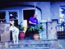 美国男子上传用鞭炮吓狗的视频 面临虐待动物罪的指控