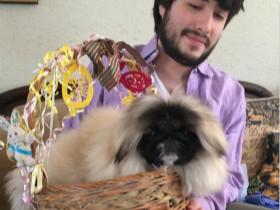 """美国小伙养了一只叫""""馄饨汤""""的京巴犬 成为宠物界的新晋网红"""