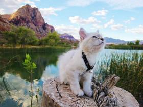 旅游时,你和哪些动物一起拍过萌萌的照片?