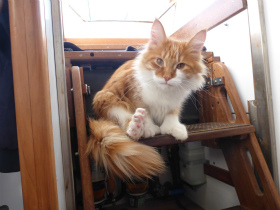 """耳聋的男人有个航游世界的梦想 一只缅因猫成为他的""""耳朵"""""""