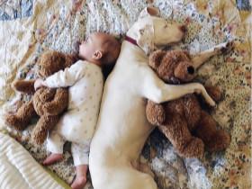 夫妻从救助站领养的一只狗狗 现在成为小儿子的好伙伴