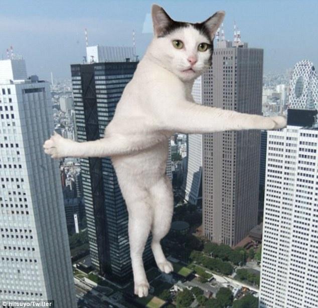 日本一只猫咪腿部交叉照爆红网络 引起众多网友恶搞PS