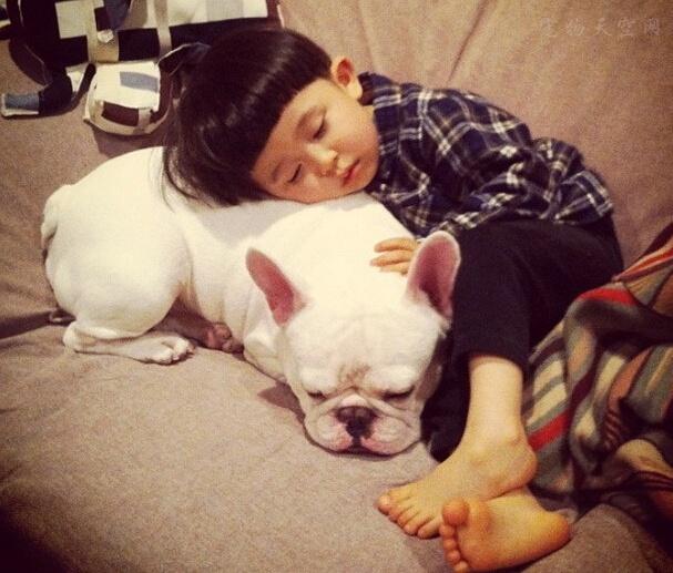 孩子看见别人家狗狗就特别高兴,是否可以养只狗陪他一起长大呢?