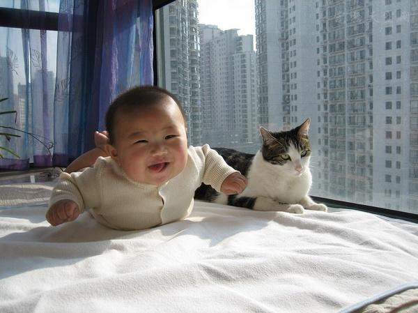 辟谣!养宠的最大谣言之一,怀孕的妈妈不能养宠物?