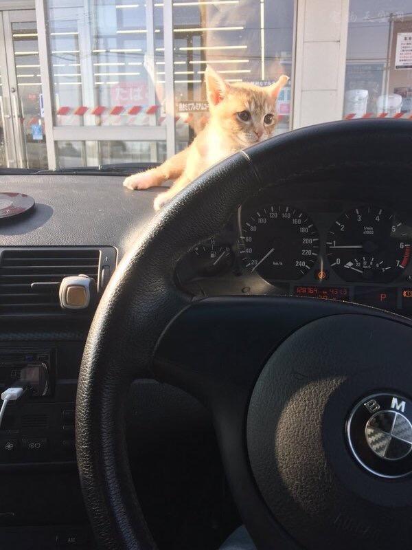 猫咪似乎特别喜欢车上的这个位置,这还怎么让老司机专心开车