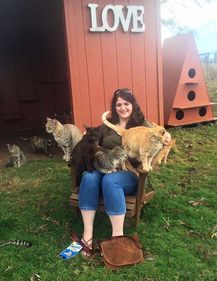 """在夏威夷有一个""""流浪猫咪""""的天堂 很多游客特意去参观"""