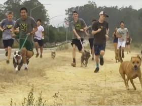 高中的学生帮助救助站遛流浪狗