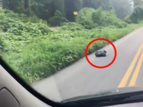 在开车的路上看到一个会动的垃圾袋 没想到里面是一只狗狗