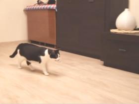 如何训练猫咪玩丢球游戏