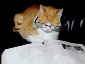 当你的才华还撑不起你的野心时,就应该静下心来好好读书了