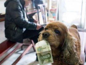 """狗狗每天找主人要零钱买吃的,商店老板还经常给它""""赠品"""""""