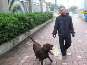 狗狗每天出门叼着个菜篮子,路人看到它就想笑