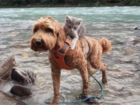 收养的狗狗捡回一只受伤的猫,于是主人做了一个决定