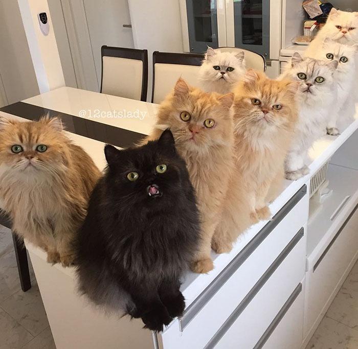 """在家中养了12只可爱的猫咪 全职""""猫妈妈"""