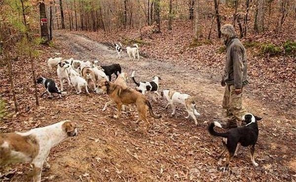 不想再养的宠物,可以怎样处理才能避免被遗弃?
