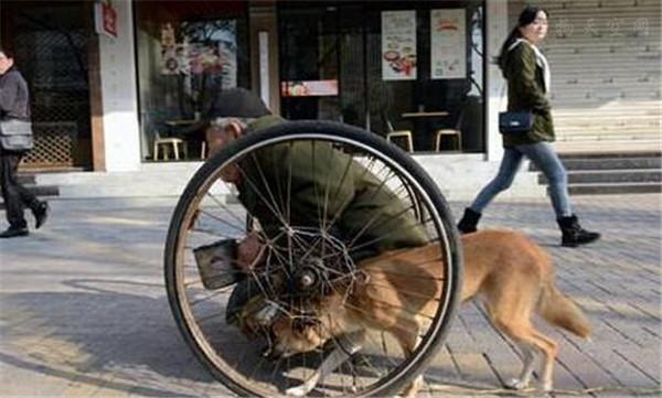 流浪狗推着残疾的主人乞讨,热心的司机每天给他们送钱送饭