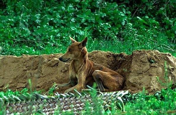 狗狗莫名其妙消失一周,在墓园找到它时主人当场泪奔