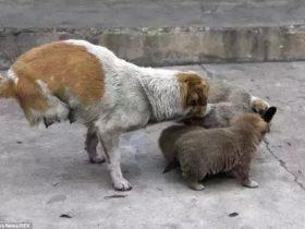 残疾流浪狗翻出食物不舍得吃,一路跟随看到了心酸的一幕