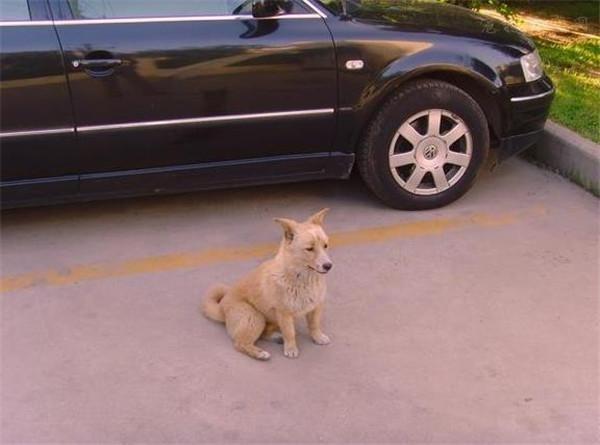 捡到流浪狗,家人反对养狗怎么办?