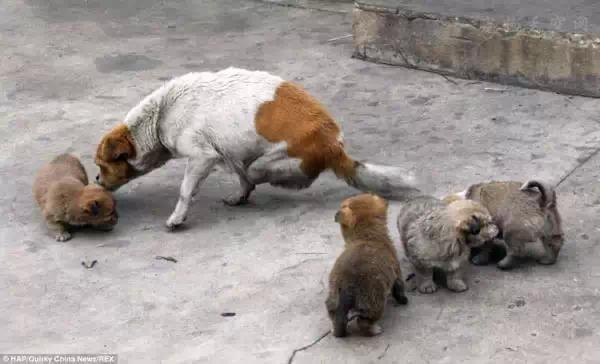 面对小区流浪狗,有什么好的解决方法或者方案?