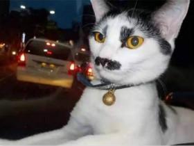 日本一家公司宣布员工可休宠物丧假 仅适用于猫咪和狗狗