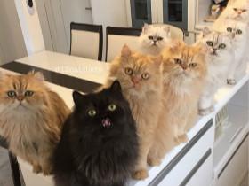 """在家中养了12只可爱的猫咪 全职""""猫妈妈""""让爱猫之人非常羡慕"""