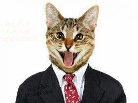 网友在脸书上传了一张猫片 导致自己的Facebook账户被封禁
